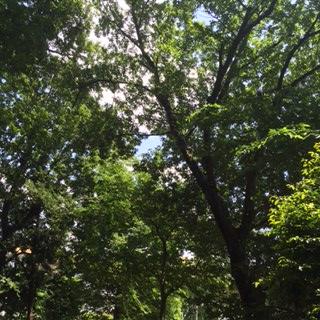 superior quality 313cd 2b428 役員の方曰く、伊勢神社は広葉樹が多く1~2度ほど涼しく感じられるそうです。